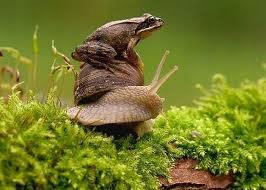 snail and frog